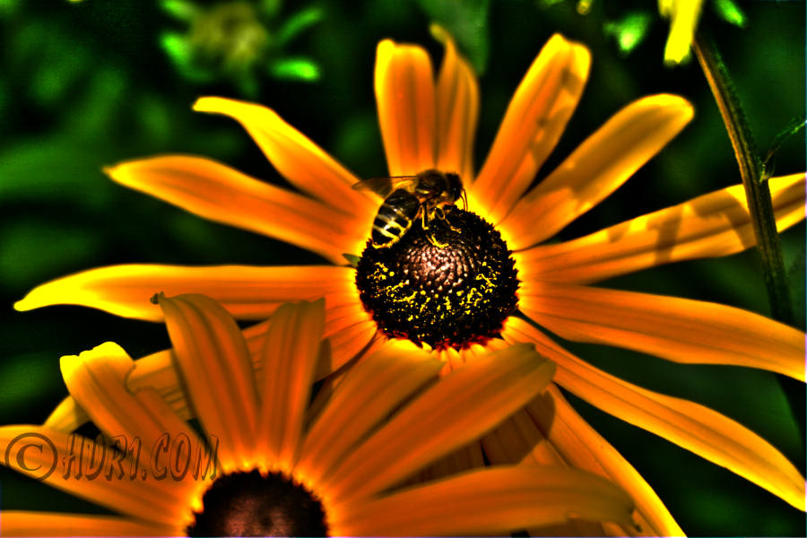 flowers in hdr at the planting fields (shots, photo, pro ...
